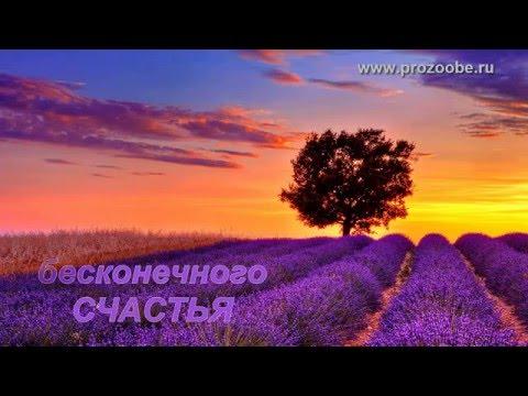 Будь Самой Веселой И Самой Счастливой Хорошей И Нежной И