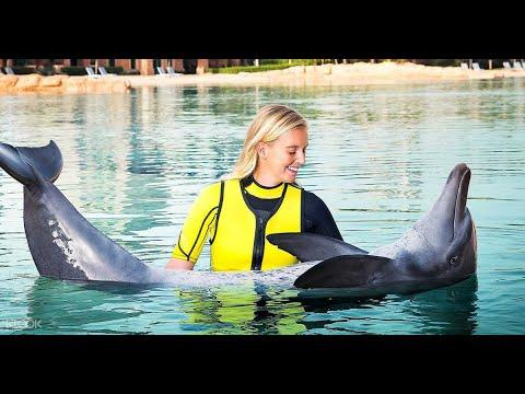 Atlantis the Palm Dubai   Dolphin Bay