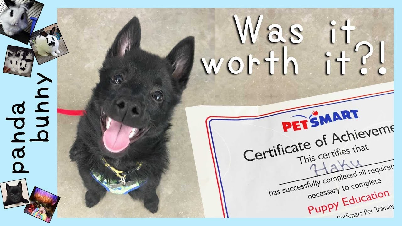 PetSmart PUPPY TRAINING Review! | PandaBunny