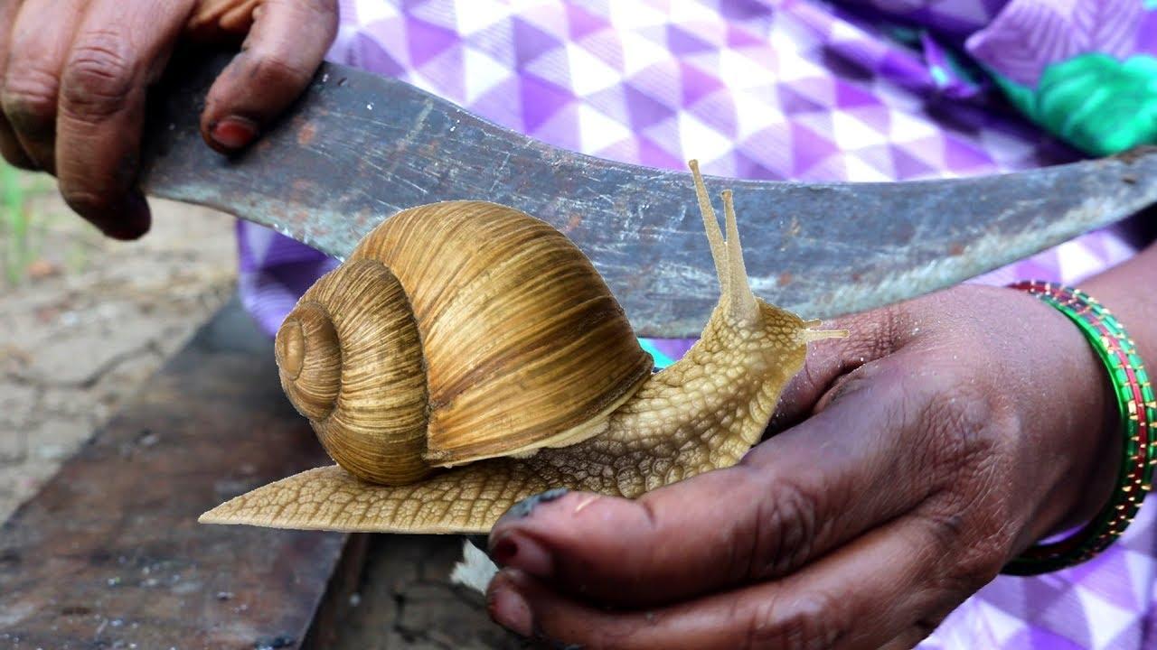 recipe for snail diet