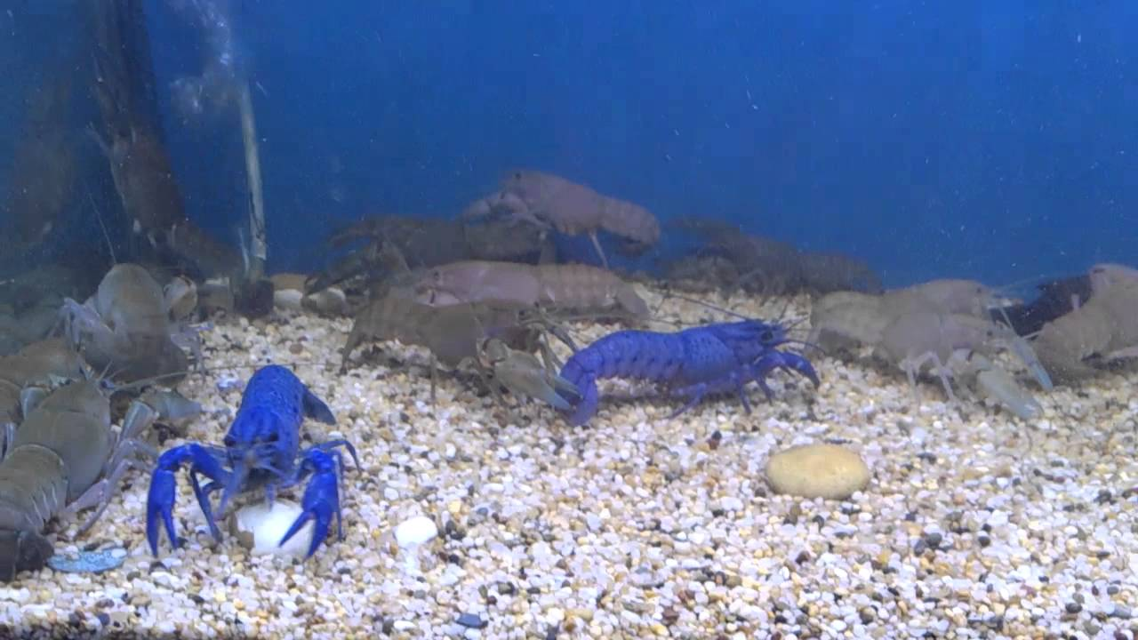 Yabby Tank With New Led Light Androvid Join 2585 M Youtube