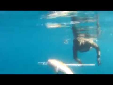 Spearfishing ► Pesca submarina | Apoyo embarcacion from YouTube · Duration:  2 minutes 6 seconds