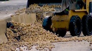 50,000 POUNDS OF POTATOES On the Highway? | What's Trending Now