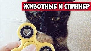 Животные и спиннер - смешные животные со спинером | Bazuzu Video ТОП подборка август 2017