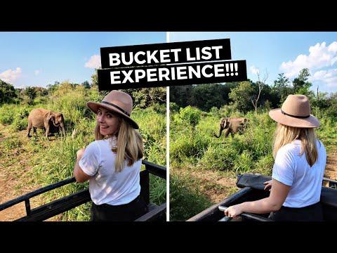 ELEPHANTS IN SRI LANKA: Minneriya National Park in Sri Lanka