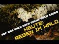 Auf Der Suche Nach Sound Regen Im Wald Free Soundpack mp3