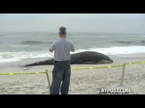 Jones Beached Whale - New York Post