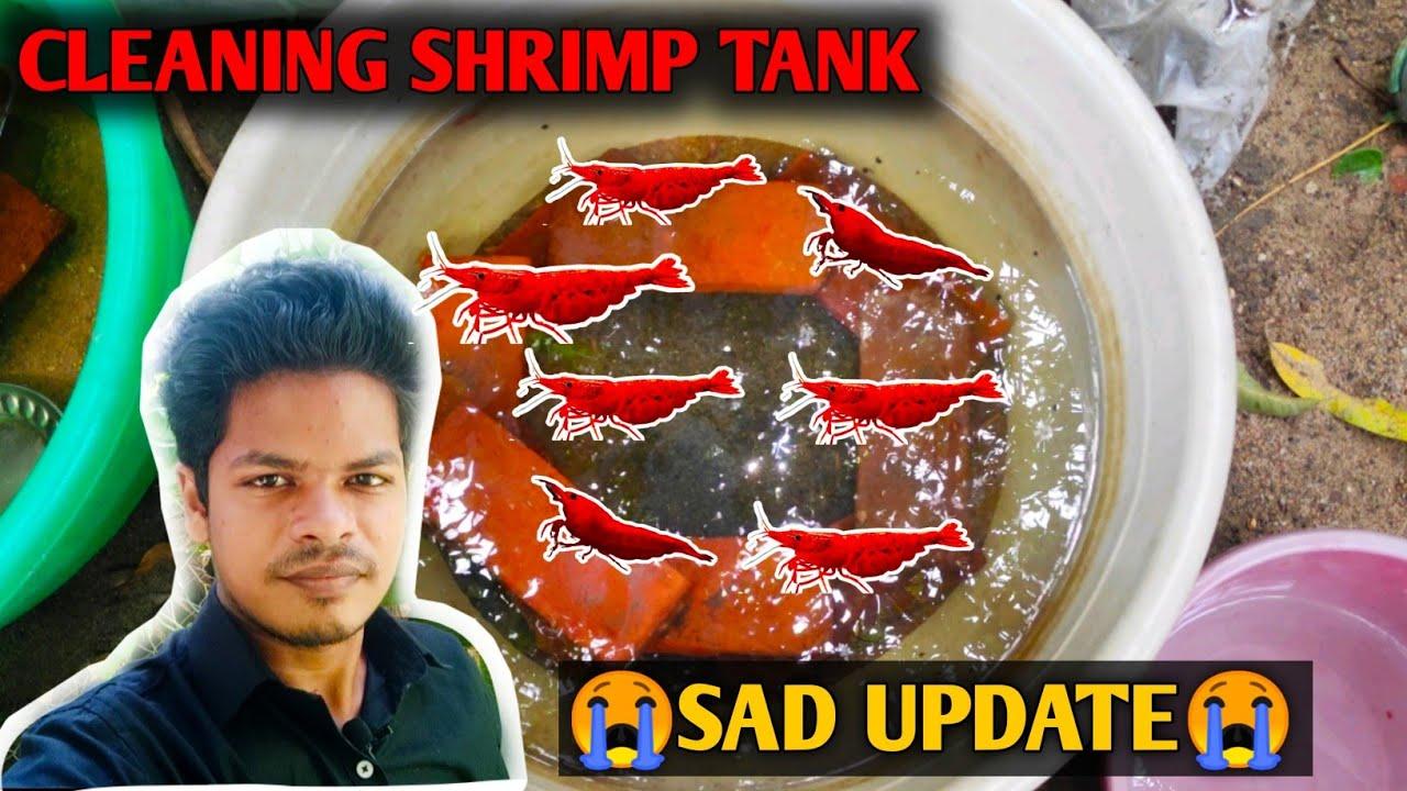 Shrimp tank cleaning   Cheap shrimp tank setup   Tamil