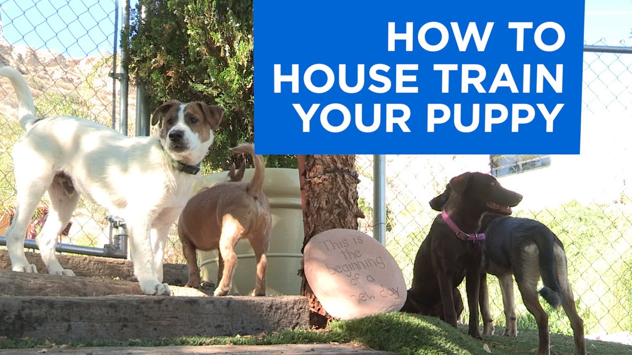 housebreaking issues | cesar's way