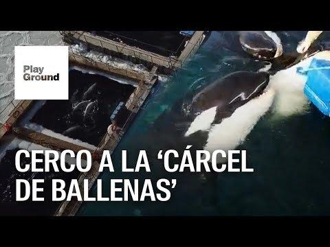 """Pulso legal contra la """"cárcel de ballenas"""" en la Bahía de Nakhodka en Rusia."""