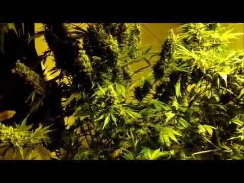 How to get high yields: environment importance