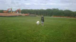 Off-leash K9 Training, Bones
