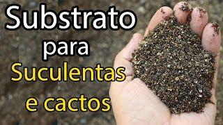Como Preparar Substrato Para Suculentas e Cactos