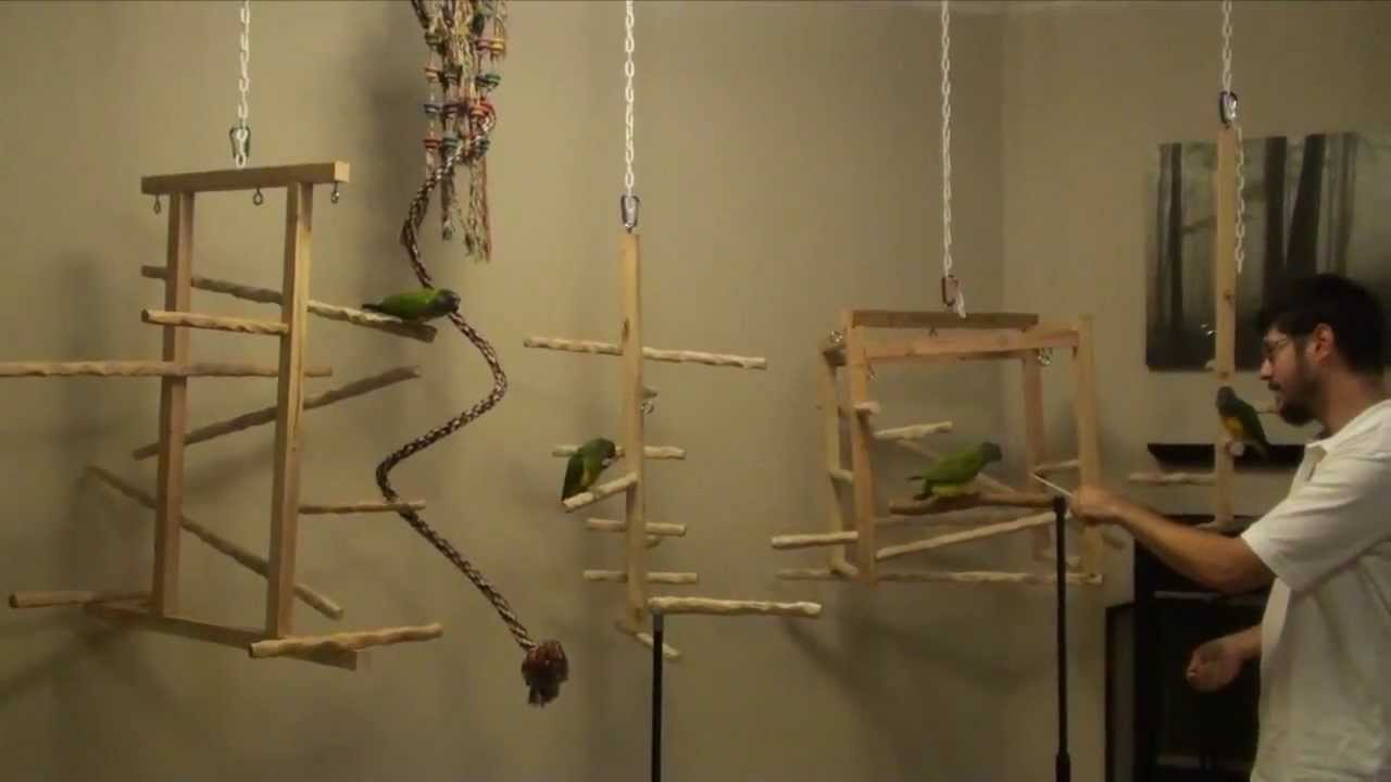 New nu perch hanging play gyms for ginger 39 s parrots rescue for How to build a bird stand