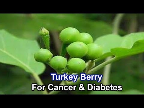 8 Secret Health Benefits of Turkey Berry