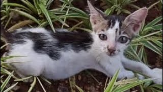 A Small And Sad Kitten Standing On The Side Of The Road Waiting For Help ( After Two Weeks)