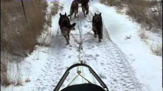 Omega Shepherds - Dog Sledding In Montana!