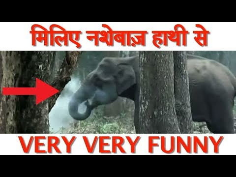 VIRAL VIDEO II CHAIN SMOKER ELEPHANT, HE SMOKES 40 CIGARETTES IN A DAY
