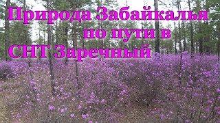 Природа Забайкалья по пути в СНТ Заречный. весна 2020
