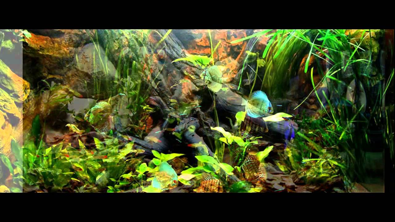 Aquarium decoration photo contest for the best aquarium for Aquarium background decoration
