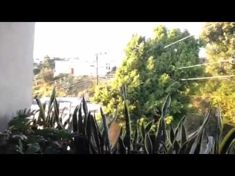 Hillside Video