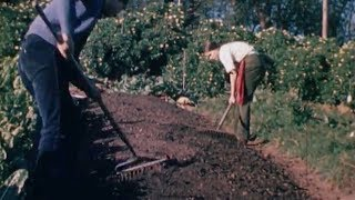 The farm that changed the way we grow food