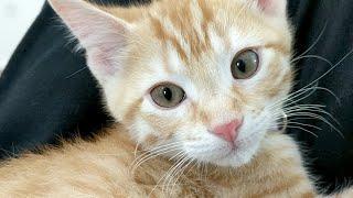 Kitten Close Up