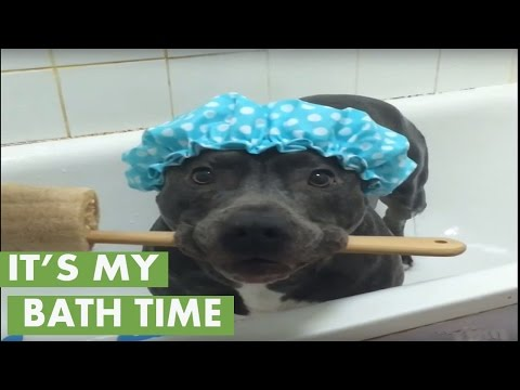 Think this dog is ready for a shower?