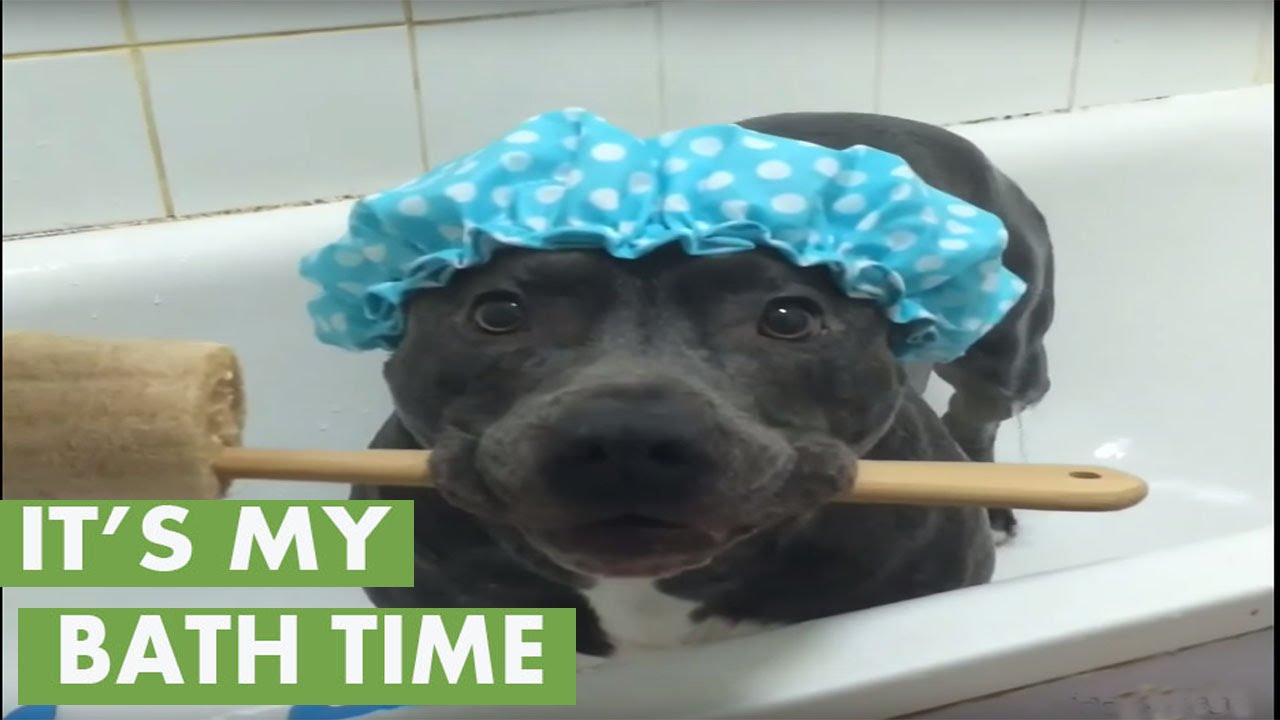 Think this dog is ready for a shower? - YouTube