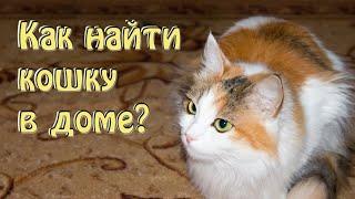 10 способов как найти кошку в доме  Как легко и быстро найти своего кота или кошку в доме