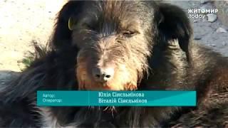 ЖИТОМИР.today |Безпритульні собаки у Бердичеві покусали жінку