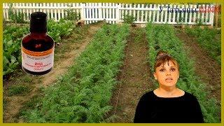 ЙОД - лучший друг для ИММУНИТЕТА растений!