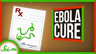 We Can Cure Ebola! (Mostly—Which Is Better Than Rarely) | SciShow News