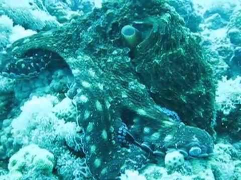 Рыба моей мечты (2011) смотреть онлайн бесплатно