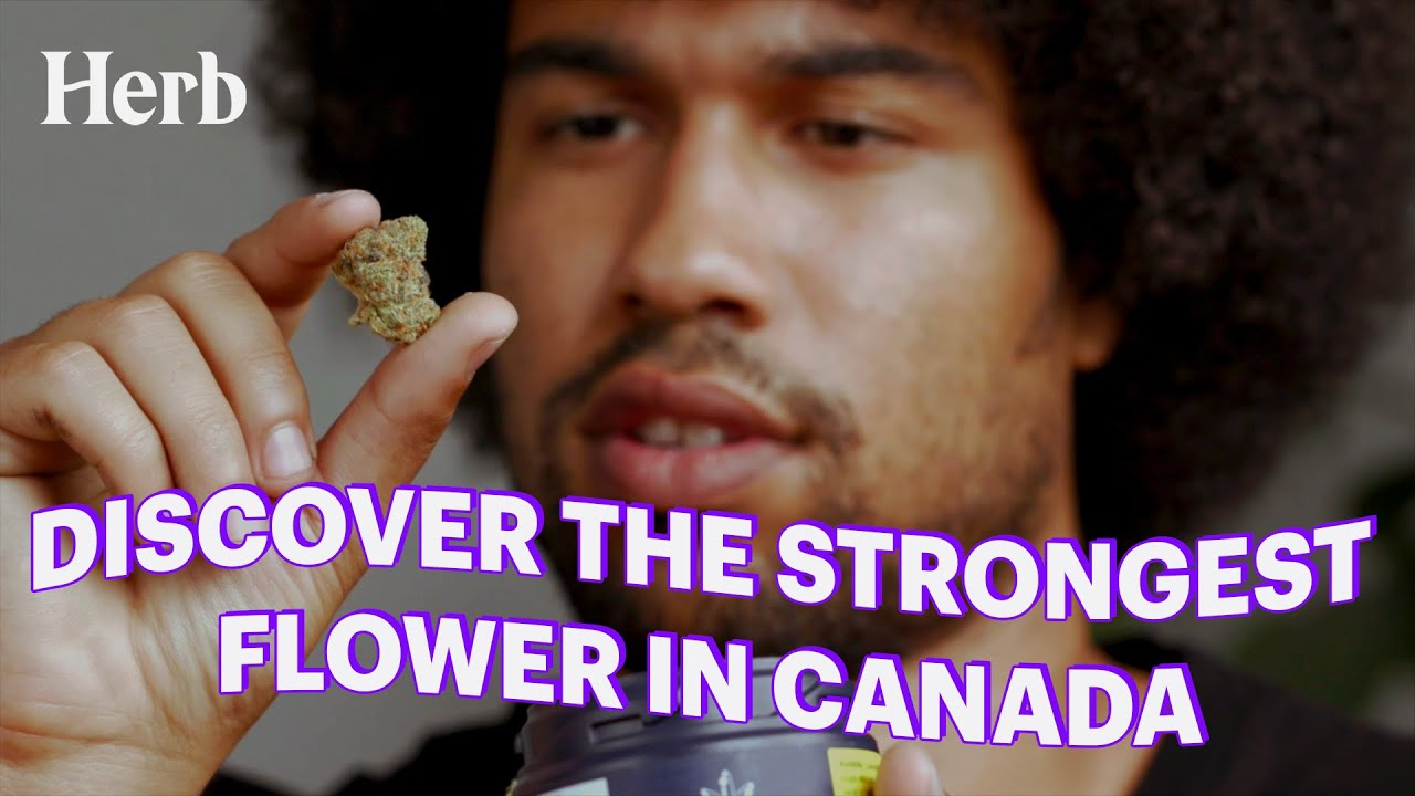 We Tried The Strongest Flower In Canada | Edison Cannabis Co.