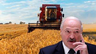Первый миллион тонн зерна в Беларуси