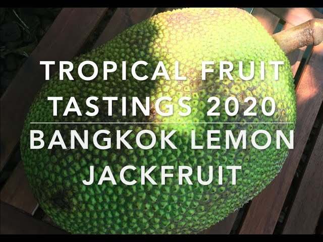 Florida Tropical Fruit Tastings 2020 -  Bangkok Lemon Jackfruit