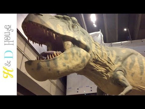 BOSTON SCIENCE MUSEUM | Honey and Darling's House
