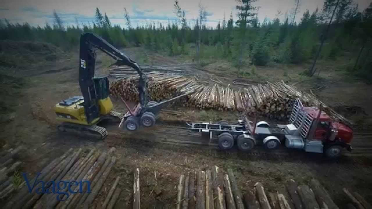 TIMBER! A Guide to the Harvesting of Trees - REtipster