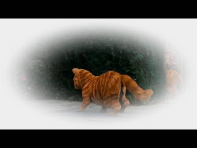 Devendra Banhart - Mourners Dance (Music Video)