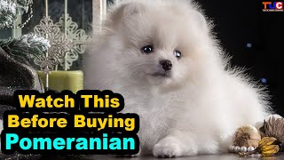 Advantages of Having a Pomeranian in HINDI : Popular Dogs : TUC