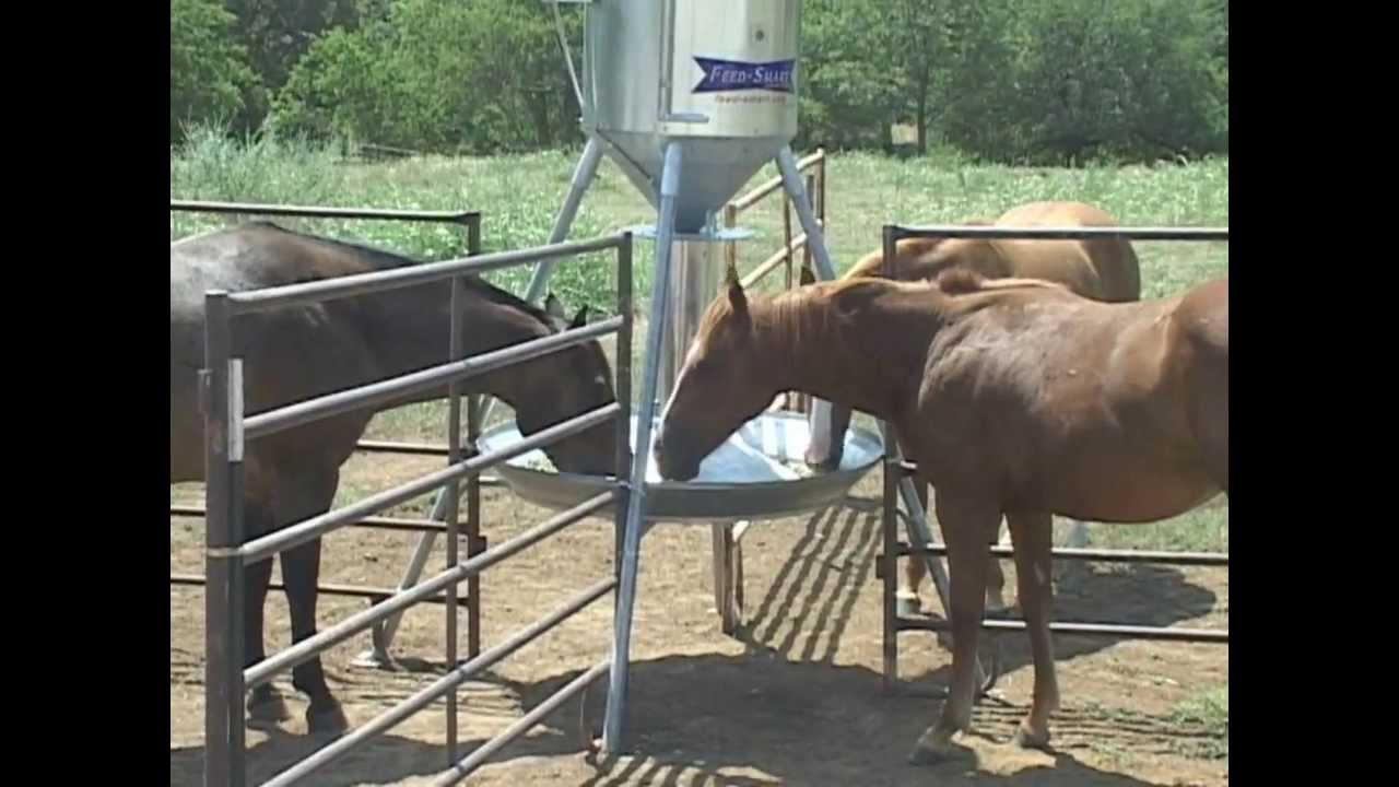 horse for the feeders home every barn made barrel feeder options waterer and