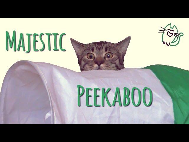 Cat's majestic stalking peekaboo