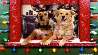Bellas imáginas y música de Navidad Belen   Images of Christmas Belen vol31