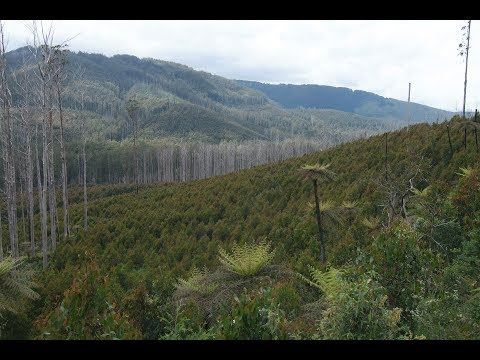Environmental Economic Accounts: A case study in the Victorian Central Highlands