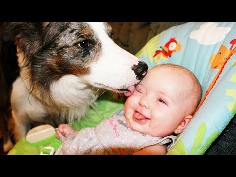 Amazing Baby and Dog laughing 😂 so cute | Dog loves Baby Videos