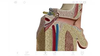 Human Anatomy Atlas 2020   Visible Body