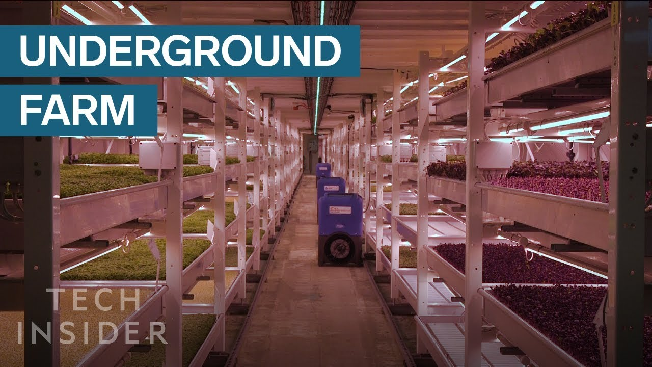This Underground Farm Produces 2 Tons Of Food A Month