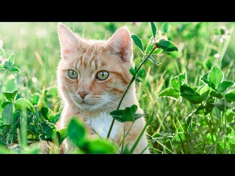 How to Care for Manx Cats - Entertaining and Comforting Your Manx