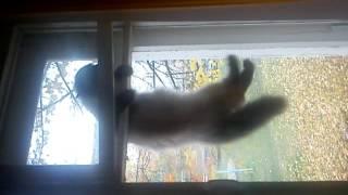 Кошка застряла между рамами
